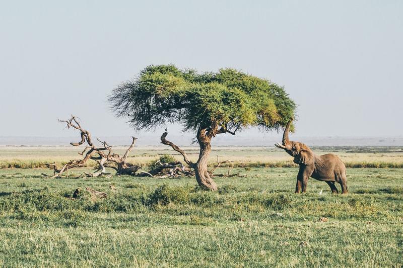 Yego_Kenia_CsiModena_BarSport